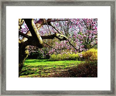 Magnolias And Forsythias Framed Print by Susan Savad