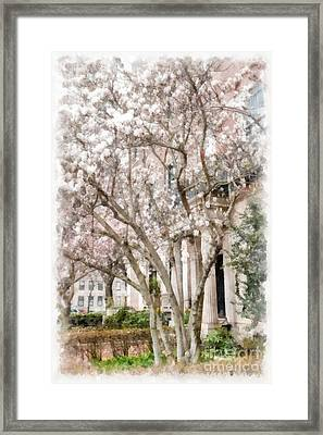 Magnolias In Back Bay Framed Print by Edward Fielding