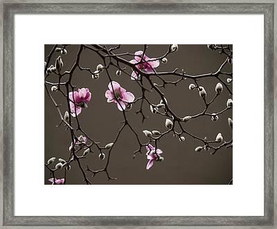 Magnolias In Bloom Framed Print