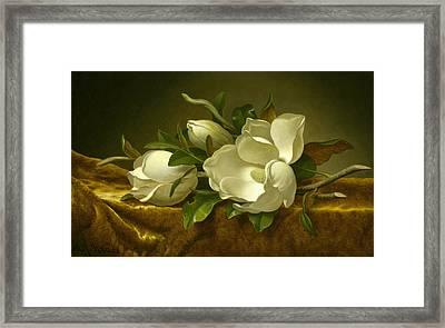 Magnolias On Gold Velvet Cloth  Framed Print