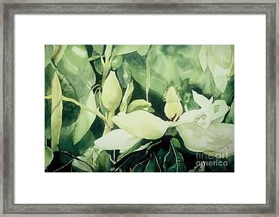 Magnolium Opus Framed Print