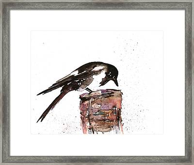 Magpie On A Stump Framed Print