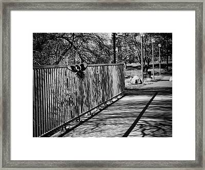 Magpie - One For Sorrow Framed Print