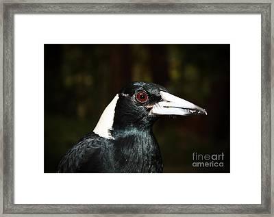 Magpie Profile Framed Print