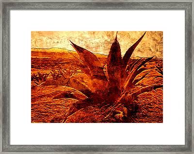 Maguey Agave Framed Print