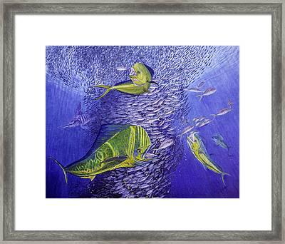 Mahi Mahi Original Oil Painting 24x30in Framed Print by Manuel Lopez
