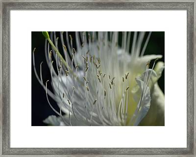 Framed Print featuring the photograph Maiapilo Flower by Pamela Walton