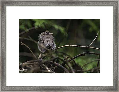 Maiden Flight Framed Print by Everet Regal