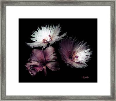 Maiden  Mother Crone Framed Print by RC deWinter