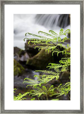 Maiden Of The Falls Framed Print by Sara Hudock