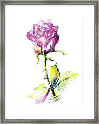 Maiden Rose Framed Print