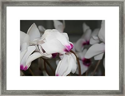 Maidens. Framed Print