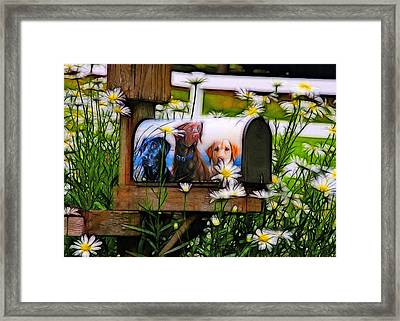 Mail From Labrador Framed Print by Tim Coleman