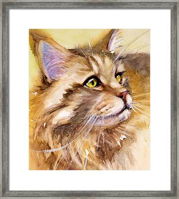 Main Coon Framed Print