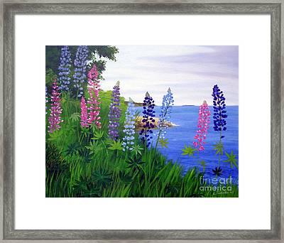 Maine Bay Lupine Flowers Framed Print by Laura Tasheiko