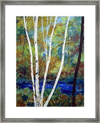 Maine Birch Stream Framed Print by Laura Tasheiko