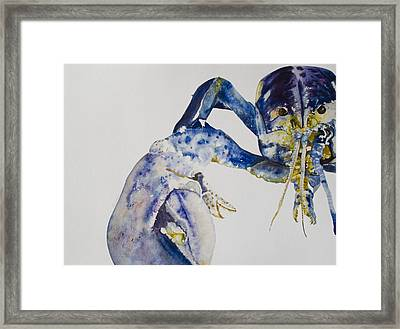 Maine Blue Lobster Framed Print by Kellie Chasse