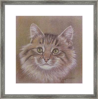 Maine Coon Cat Framed Print by Dorothy Coatsworth