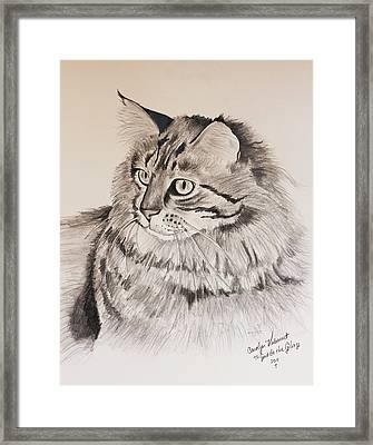 Maine Coon Cat Dusty Framed Print by Carolyn Valcourt
