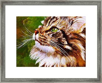 Maine Coon Cat Framed Print