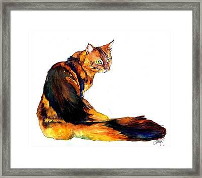 Maine Coon Cat Portrait Framed Print