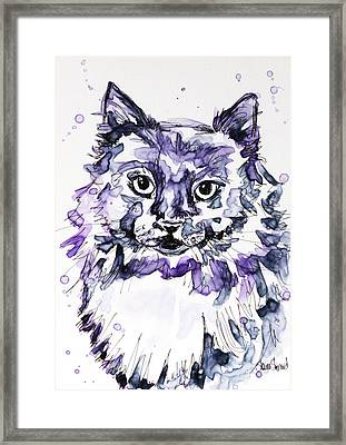 Maine Coon In Purple Framed Print by Shaina Stinard