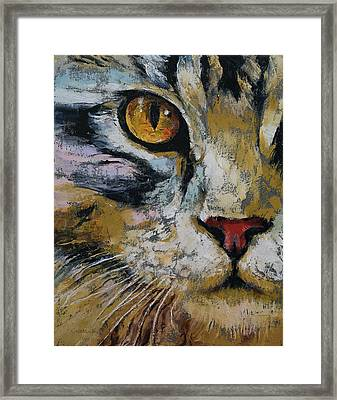 Maine Coon Framed Print by Michael Creese