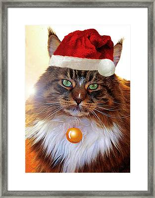 Framed Print featuring the photograph Maine Coon Xmas by Roger Bester