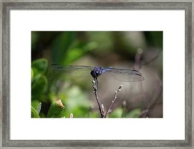 Framed Print featuring the photograph Maine Dragonfly by Kirkodd Photography Of New England