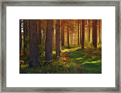 Framed Print featuring the photograph Maine Forest Sunset by David Dehner