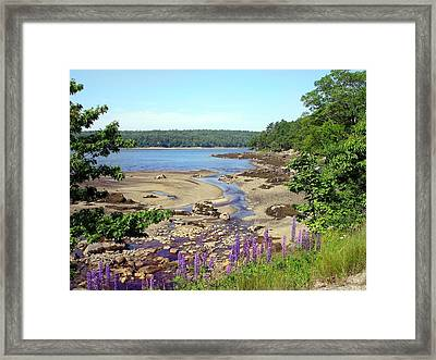 Maine Lupines Framed Print