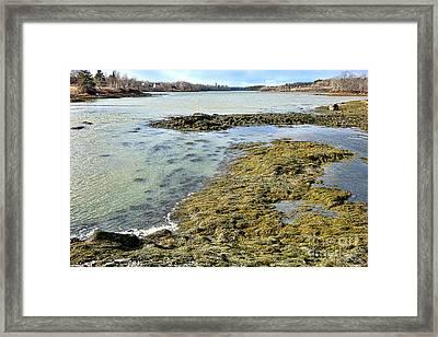 Maine Weaskeag River Framed Print by Olivier Le Queinec