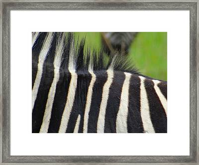 Mainly Mane Framed Print