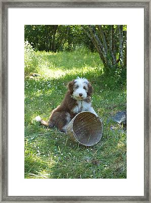 Maisie With Basket Framed Print by Mark Alan Perry