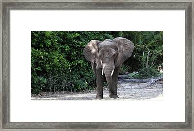 Majestic African Elephant Framed Print by Mary Haber