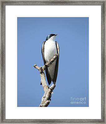 Majestic Framed Print by Anita Oakley
