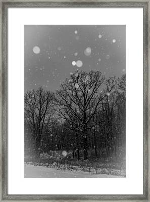 Framed Print featuring the photograph Majestic  by Annette Berglund