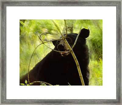 Majestic Black Bear Framed Print