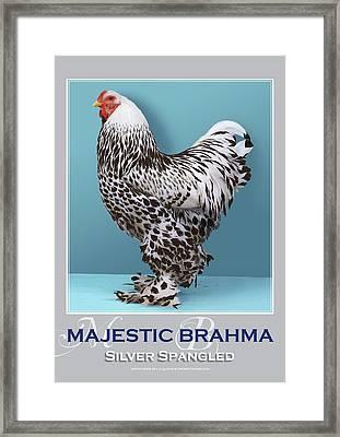 Majestic Brahma Silver Spangled Framed Print