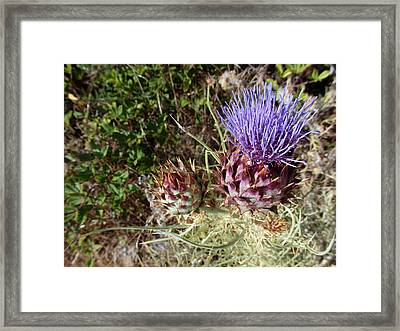 Majestic - Cirsium Purple Plume Thistle Framed Print