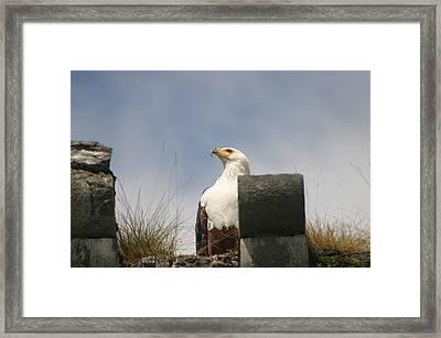 Majestic Eagle Framed Print by Dagmar Batyahav