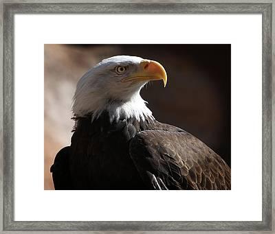 Majestic Eagle Framed Print