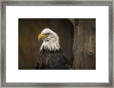 Majestic Eagle Framed Print by Robin Williams