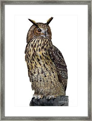 Majestic Eurasian Northern Eagle Owl Bubo Bubo - Hibou Grand-duc - Buho Real - Nationalpark Eifel Framed Print