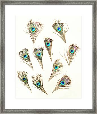 Majestic Feathers Framed Print