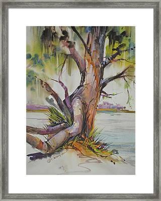 Majestic Live Oak  Framed Print