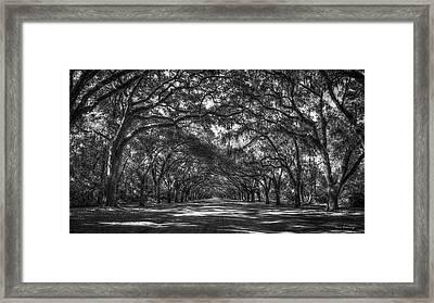Majestic Live Oaks Wormsloe Plantation Art Framed Print