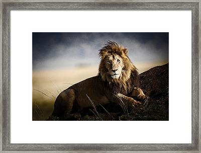Majestic Male On Mound Framed Print by Mike Gaudaur