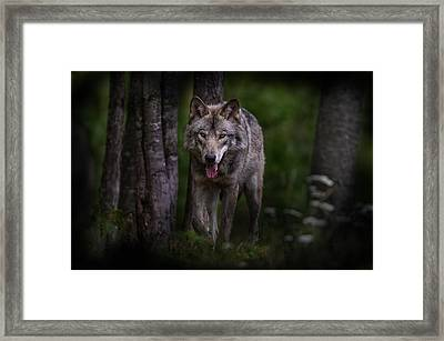 Majestic Framed Print by Michael Cummings