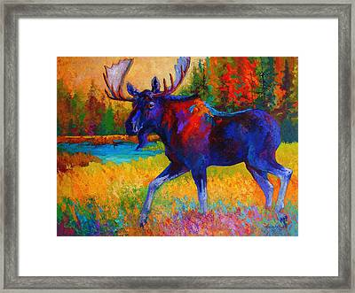 Majestic Monarch - Moose Framed Print by Marion Rose